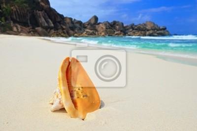 Shell grande en la orilla del mar