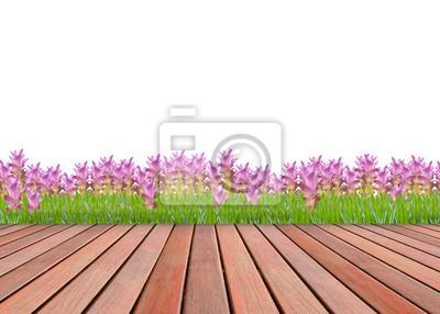 siam rosa jardín de tulipanes y de madera terraza textura