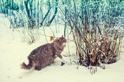 Póster Siberiano, gato, ambulante, nieve, bosque