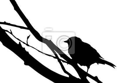 Silueta d'un oiseau sur une branche