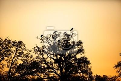 silueta de garzas en un árbol con la puesta de sol