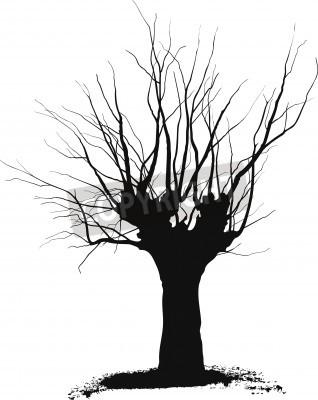 Silueta Del árbol De Acacia Dibujos Negros Sobre Un Fondo Blanco