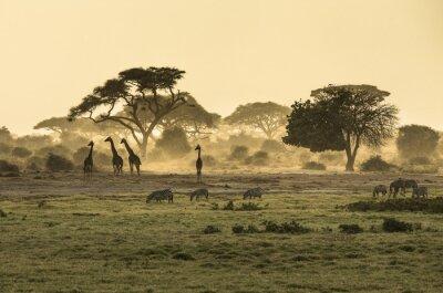 Póster Silueta di jirafa