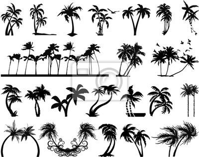 Siluetas de la palmera
