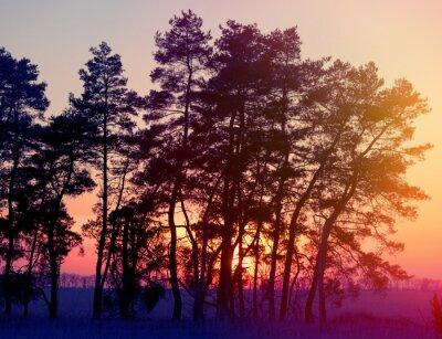 Póster siluetas de los pinos