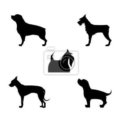 Póster Siluetas del perro