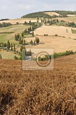 Sinuoso camino de cipreses, Toscana.