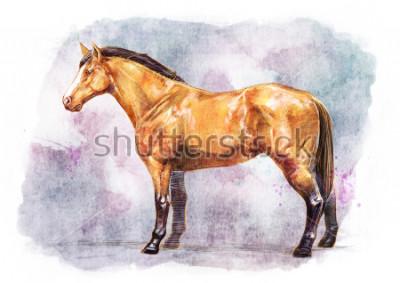 Póster SKET HORSE / PINTURA A COLOR AGUA