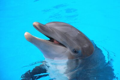 Póster Śmiejący się delfin w Loro Parque na Teneryfie