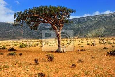 Socotra Islandia