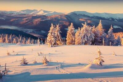 Póster Soleado amanecer de la mañana en la montaña de invierno. Estilo retro.