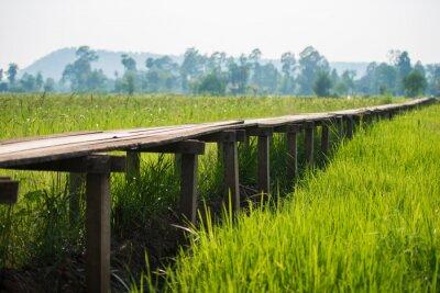 Póster Soleado amanecer en un campo en Tailandia