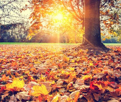 Póster Soleado follaje de otoño