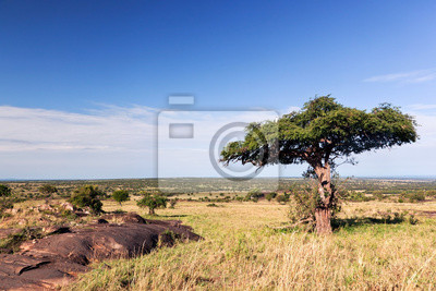 Solo árbol en la sabana, selva de África. Tsavo West, Kenia.