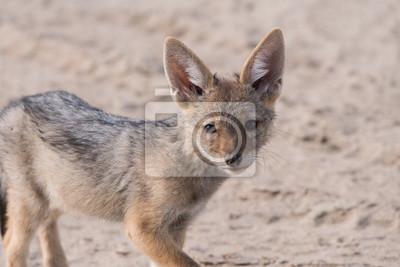 Solo retrato del perrito del chacal