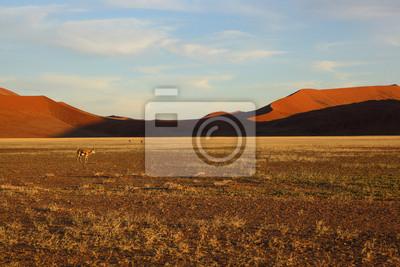 Springbuck en Namib Naukluft NP