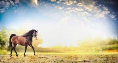 Póster Stallion caballo corriendo trote sobre fondo de la naturaleza con hermoso cielo, banner