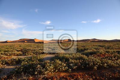 Succelent Flores en Namib Naukluft NP