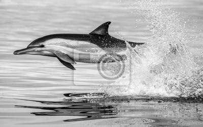 Sudáfrica. Bahía Falsa Una excelente ilustración.