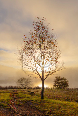Sunrise through low clouds at autumn colored tree