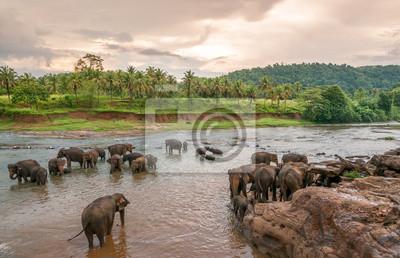 Swimmong Elephants