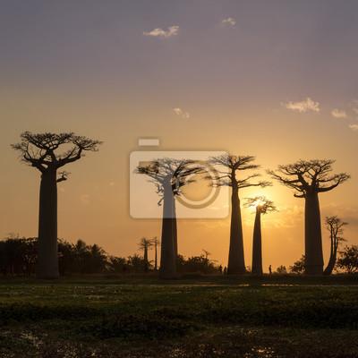 Tarde en Baobab avenida