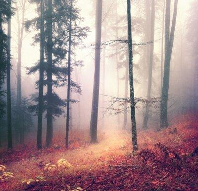 Póster Temporada de otoño de fondo de los árboles forestales color de la magia con el camino rojo anaranjado brillante. Bosque estacional hermoso.