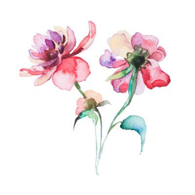 Póster the spring flowers watercolors isolated on the white background