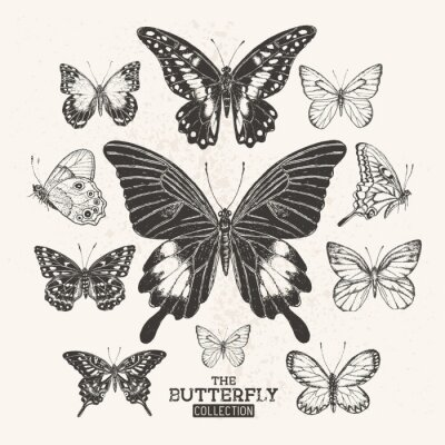 Póster The Vintage Butterfly Collection