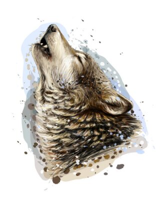 Póster The wolf howls. Sketchy, graphical, color portrait of a wolf head on a white background with splashes of watercolor.
