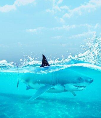 Póster Tiburón bajo el agua, ilustración 3d