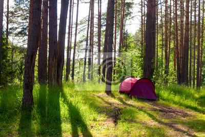 Tienda de campaña en un bosque