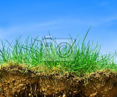 Tierra, hierba, cielo sección transversal