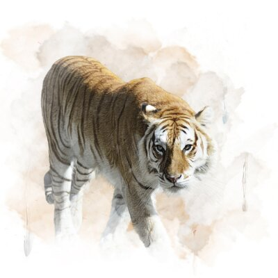 Póster Tiger Walking
