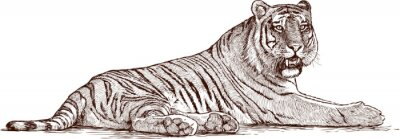 Póster tigre acostado
