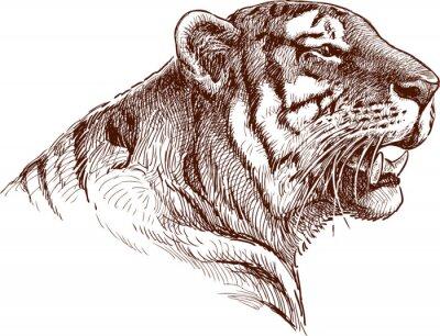Póster tigre rugiente