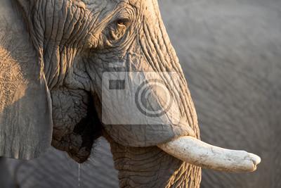 Toro del elefante en la charca.