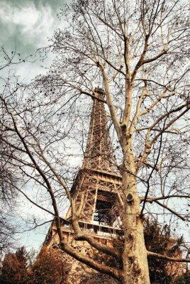 Torre Eiffel oculta entre los árboles.