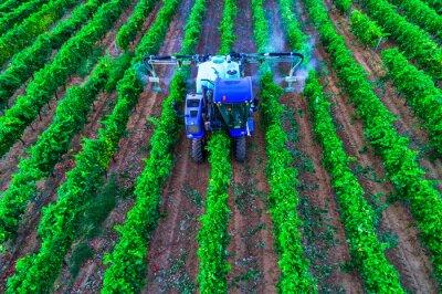Tractor spraying vines over vineyard in Europe.