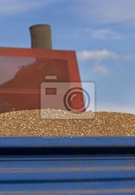 Tractor trailer lleno de grano de trigo