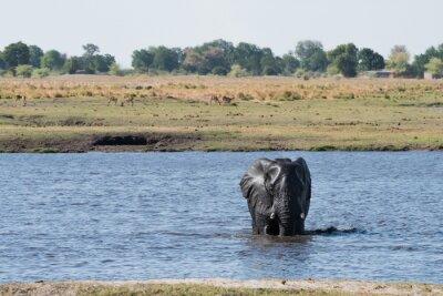Travesía del agua del elefante