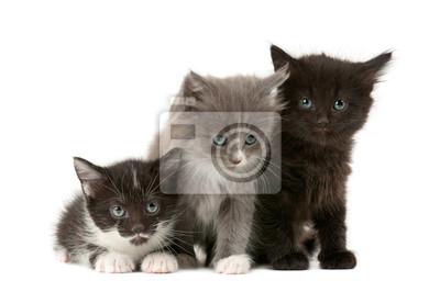 Tree gatitos mullidos