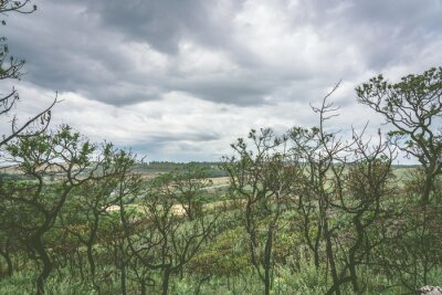 Trees in a overcast day inside the Serra da Canastra National Park in Brazil