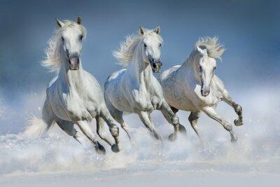 Póster Tres, blanco, caballo, corrida, galope, nieve