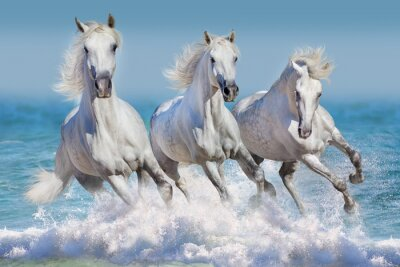 Póster Tres caballo blanco correr galopar en las olas en el océano