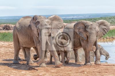 Tres elefantes jóvenes