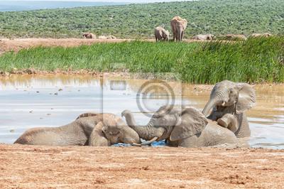 Tres, elefantes, juego, agua, agujero