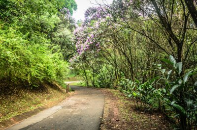 Póster Trilha entre árboles en un parque en São Paulo
