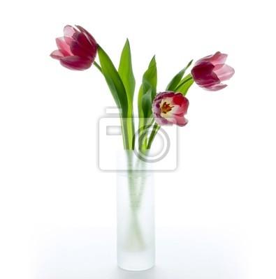 tulipanes en blanco