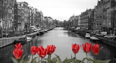 Póster tulipanes rojos en amsterdam